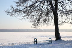 Wood bench under tree the park at winter day Stock Images