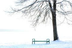 Wood bench under tree the park at winter day Royalty Free Stock Images