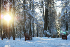Wood bench in winter park Stock Photo
