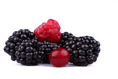 Wood berries stock images