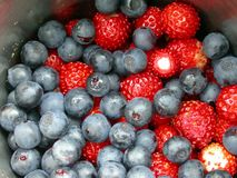 Wood-berries. Stock Photography