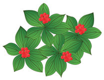 Wood berry. Wood plant stone-berry. The vector image Vector Illustration