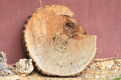 Wood. Big wood cut for table Royalty Free Stock Images