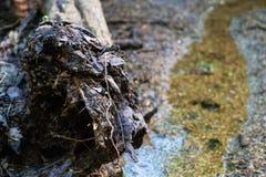 Wood biodegradation Stock Photos