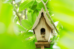 Wood bird house Royalty Free Stock Photos