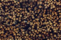 Wood björkjournaler Arkivfoto