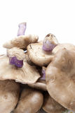 Wood blewits. Royalty Free Stock Photos
