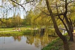 Wood blick för lutandevattenspegel Sommar värme grönska Gräs Royaltyfri Fotografi