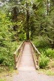 Wood blytak för banastrandpromenadbro in i skogen royaltyfri fotografi
