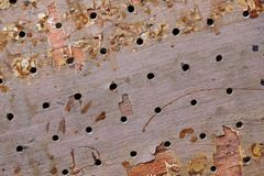 Wood board with drilling hole Royalty Free Stock Photos