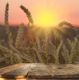 wood board table in front of field of wheat on sunset light. Ready for product display montages stock image