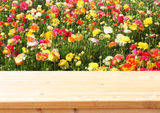 Wood board table in front of summer landscape of field with many flowers Royalty Free Stock Image
