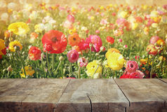 Wood board table in front of summer landscape of flower field bloom Royalty Free Stock Photography