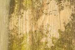 Wood board texture background with moss Royalty Free Stock Image