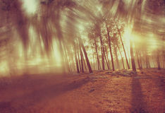 Wood boards and summer light among trees. textured image. filtered stock photos