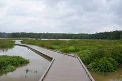 Wood boardwalk or path in wetland or swamp area with green plants stock photography