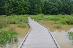 Wood boardwalk or path in wetland or swamp area with green plants stock photos