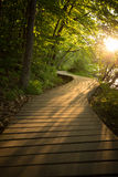 Wood Boardwalk Trail in Sunset Woods Forest. A wooden boardwalk trail runs through the woods and forest during sunset in Minnesota Stock Image