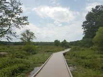 Wood boardwalk in wetland with many plants Stock Photography
