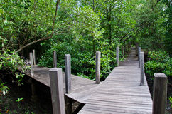 Wood Boardwalks go to mangrove forest, Thailand Royalty Free Stock Photography