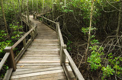 Wood Boardwalks mangrove forest Stock Image