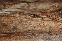 Wood borers holes on wooden plank Royalty Free Stock Photo