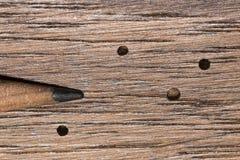 Wood Boring Beetle Damage Stock Image