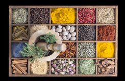 Wood box with spices and herbs with fresh chive and garlic on wooden mortar Stock Images