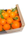 Wood box of valencian oranges on white background Stock Photo