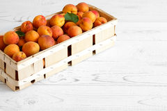Wood box of whole orange apricots with red blush on rustic white Royalty Free Stock Photo