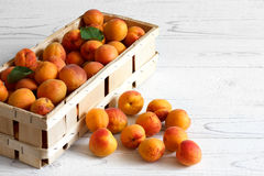 Wood box of whole orange apricots with red blush on rustic white Royalty Free Stock Images