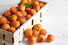 Wood box of whole orange apricots with red blush on rustic white Stock Photos