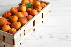 Wood box of whole orange apricots with red blush on rustic white Stock Image