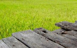 Wood bräde i den mer unga risfältet royaltyfria foton