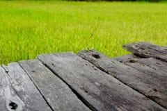Wood bräde i den mer unga risfältet royaltyfri fotografi