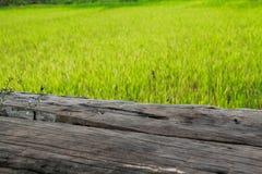 Wood bräde i den mer unga risfältet royaltyfria bilder