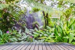 Wood bräde i rainforest Arkivbilder