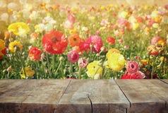 Wood brädetabell framme av sommarlandskapet av blom för blommafält royaltyfri fotografi