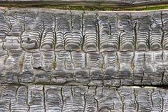 wood bränd textur Arkivfoton