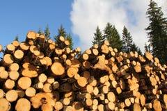 Wood bränsle i Spruce skog arkivbilder