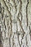 Wood brak mout Stock Images