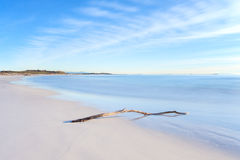 Wood branch on a white beach on sunset time Stock Photo