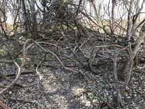 Tangled wood branches that show desolation. Wood branches that have fallen and are dead. Shows desolation of the area and the death of vegetation royalty free stock photography
