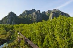 Wood bridge. The walking bridge nature study Royalty Free Stock Image