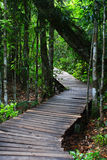 Wood bridge. Wood bridge in the forest Royalty Free Stock Photos