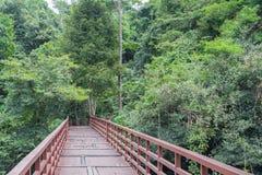 Wood bridge. The beautiful  wood bridge in the jungle Royalty Free Stock Image