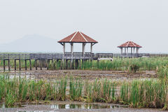 Wood Bridge Bua marsh Royalty Free Stock Images