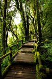 Wood bridge Doi Inthanon Thailand Royalty Free Stock Images