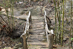 Wood bridge. In the forest Stock Photos