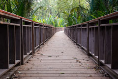 Wood bridge in forest Stock Photography